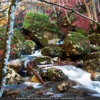 Estate d'Aspromonte: il ricco programma del Parco, tra natura, cultura e attività ludiche
