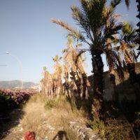 Reggio - Area verde del Calopinace, la denuncia di un cittadino - FOTO