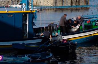 Chianalea, l'antica pesca del pesce spada