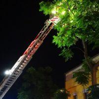 """Reggio, Vigili del fuoco """"amici degli animali"""". La lettera di un cittadino"""