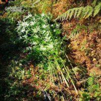 Altra coltivazione di canapa scoperta dai Carabinieri in provincia di Reggio Calabria