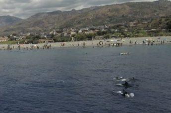 La bellissima danza dei delfini a Punta Pellaro