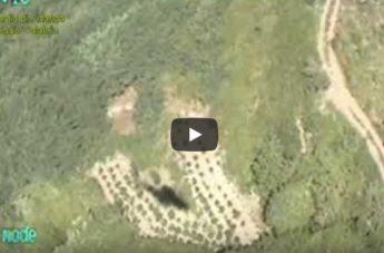 Arrestati due coltivatori di marijuana il provincia di Reggio: il video dell'operazione