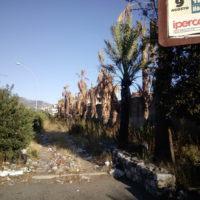 Alberi del Calopinace in stato di degrado, un reggino denuncia: 'Nessuna cura' - FOTO