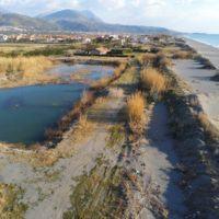 Calabria, cartelli sulla spiaggia per la tutela dei Gigli di Mare