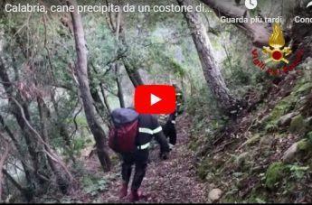 Calabria, cane precipita da un costone di roccia. Il salvataggio dei Vigili