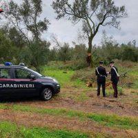 'Piana stupefacente': disarticolata la filiera della droga operante a Reggio e in altre parti d'Italia