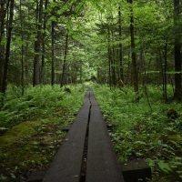 Da Montalto a Polsi, il sentiero e come arrivarci in Trekking