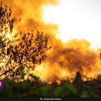 Incendi a Reggio, l'appello di Europa Verde: 'Serve prevenire'