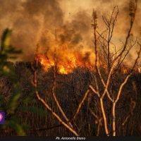 Reggio sotto assedio: in fiamme anche la collina di Pentimele