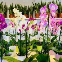 Piante online, il tuo giardino in un click. Scopri l'e-commerce di Orchidea Staff