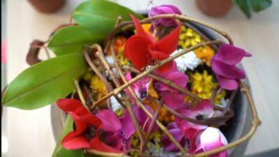 Orchidea Staff