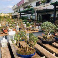 Nuova area Garden da Orchidea Staff, adesso è anche centro Bonsai - FOTO