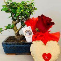 San Valentino, al tuo omaggio floreale ci pensa Orchidea Staff