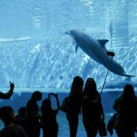 Museo del Mare, l'idea dell'acquario: 5000 mq con vasche, negozi e bar