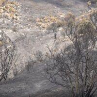Incendi in Aspromonte, 17 km di sentieri 'bruciati': l'analisi delle Guide del Parco