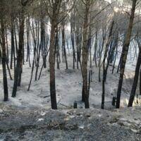 Frutteti in fiamme e disagi idrici: Motta fa la conta dei danni